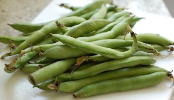 fava beans spring
