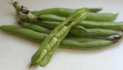 preparing fava beans