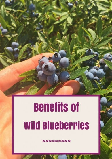 Benefits of Wild Blueberries