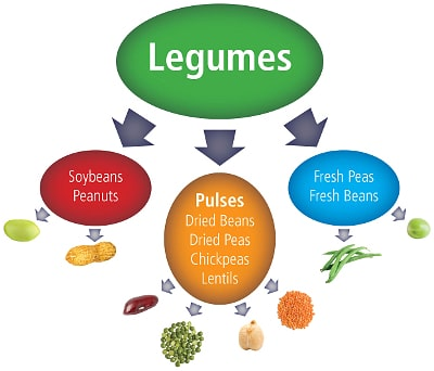 the difference between pulses and legumes - take the pulse pledge
